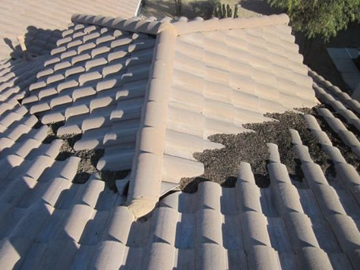 Roof Cleaning Amp Roof Maintenance The Roof Medics